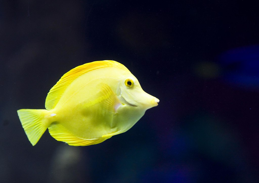 One Small Fish Thomas Hawk Flickr