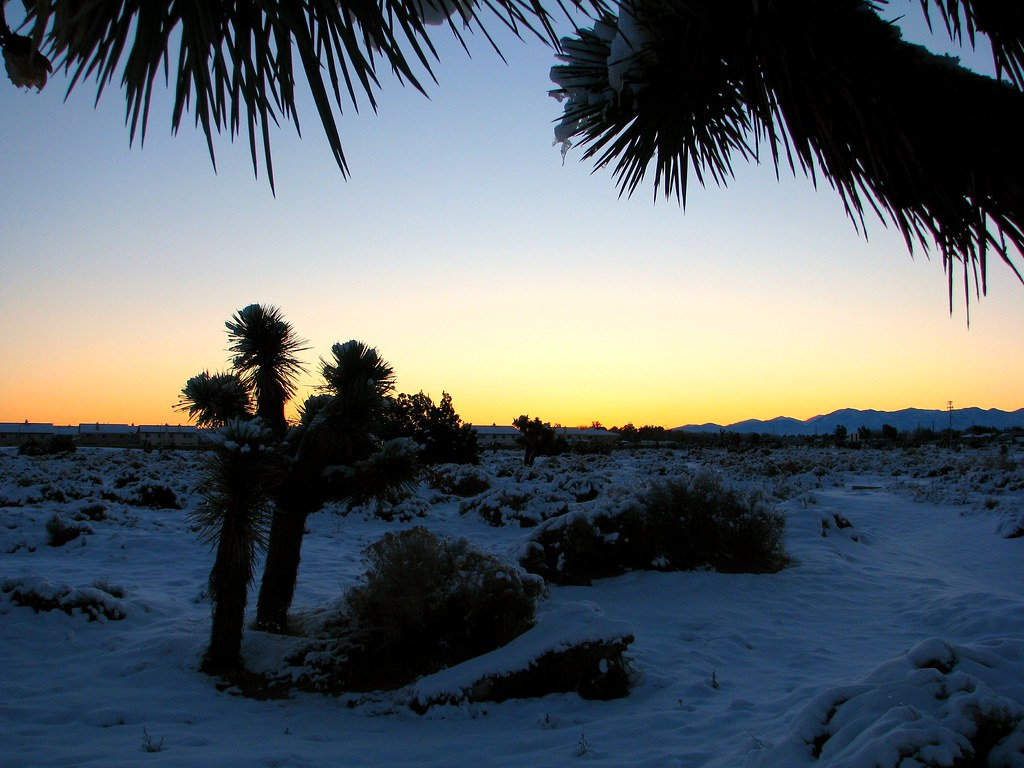 Joshua Trees In The Winter Lancaster California In