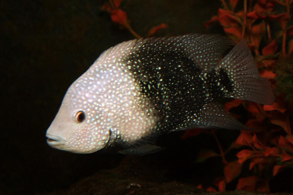 2008 07 25 athens tx freshwater fish hatchery texas for Fish hatchery texas
