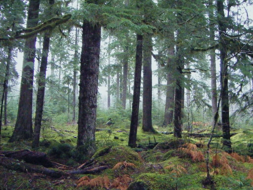Oregon Forest Mt Hood National Forest Oregon View On