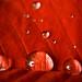 Kissed by Rain.