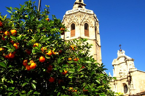 Orange tree in Valencia | by Photocritic.org