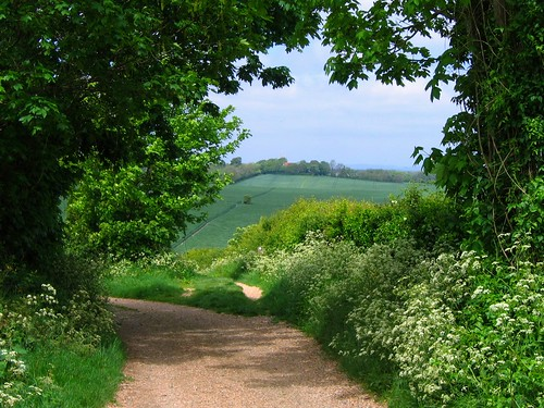 South Downs Way West of Alfriston | by UGArdener