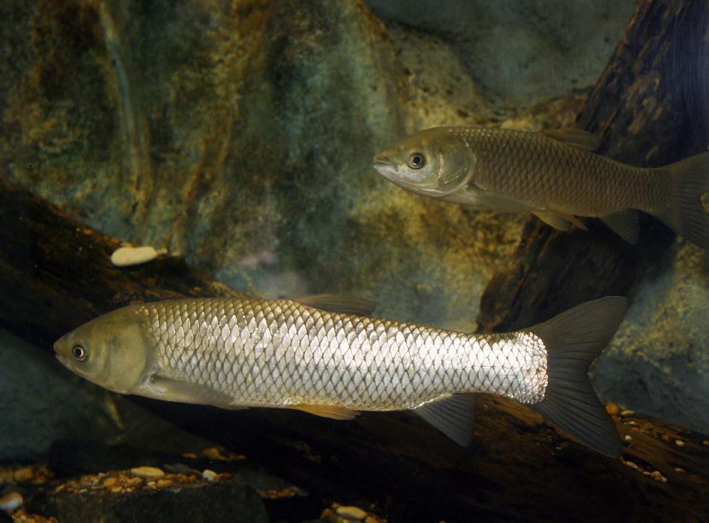 2008 07 25 athens tx freshwater fish hatchery 2946 for Fish hatchery texas