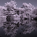 Reflection in Infrared