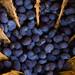 tiny blue poppy seeds