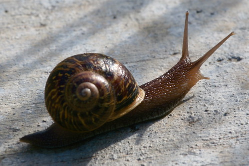 Snail's Pace | by Randy Son Of Robert
