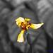 Orchide 1