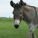 Jackie O'Donkey on July 4