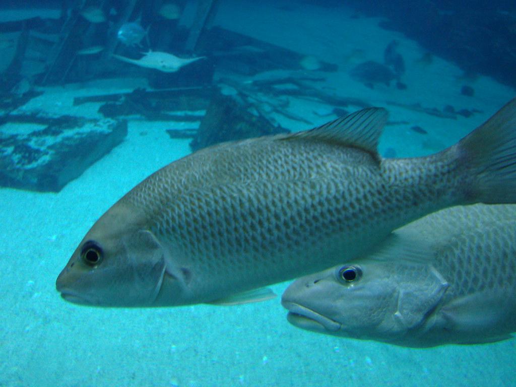 2008 03 16 Camden 030 New Jersey State Aquarium Allie