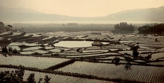 RICE PADDIES ABOVE LAKE SUWA 諏訪湖 | by Okinawa Soba (Rob)