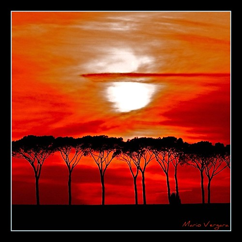 Sunset and trees #2 | by iomario 