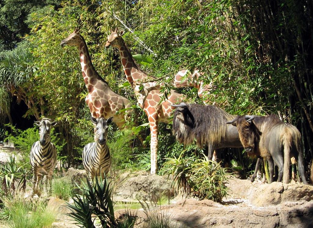 California Disneyland Jungle Cruise Animals Jared