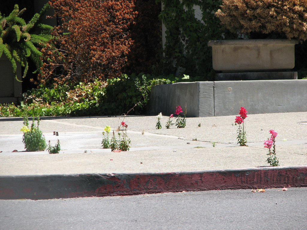 Flowers Old Kaiser Hospital Santa Clara Flowers volu…