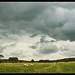 sheep - oblivious (in Rutland)