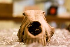 Noisebridge Skull