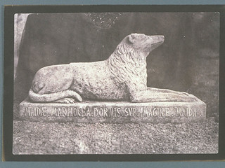 Sir Walter Scott's Favourite Dog, Maida | by National Media Museum