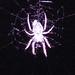 BOT Spider