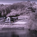 Japanese Rural Farmhouse Reflection in Infrared