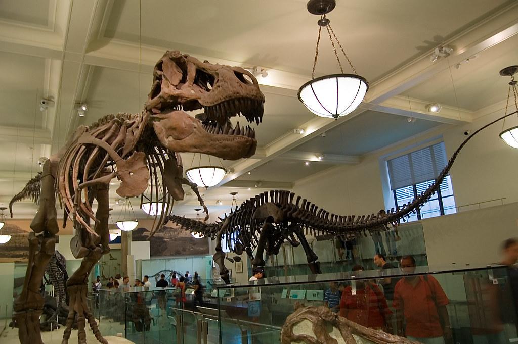 Dinosaurs New York Museum Natural History