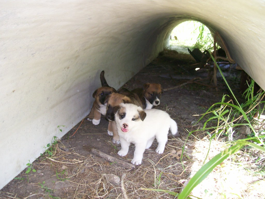 Abandoned Puppies | An...