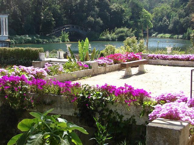Aizoaceae lampranthus sp rayitos de sol jard n for Jardin botanico vina