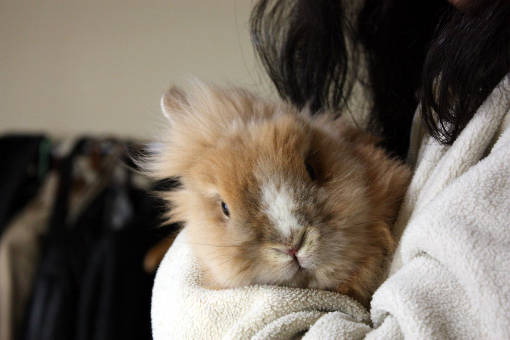 Rabbit New Room