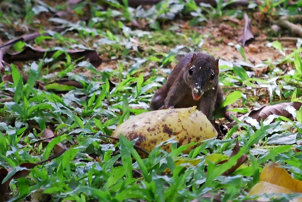 Eat Trees Let a Tree Shrew Eat in
