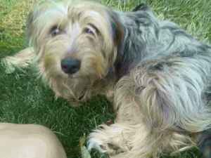 Image Result For Springfield Mo Dog