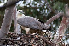 Nest Renovations, 4th September