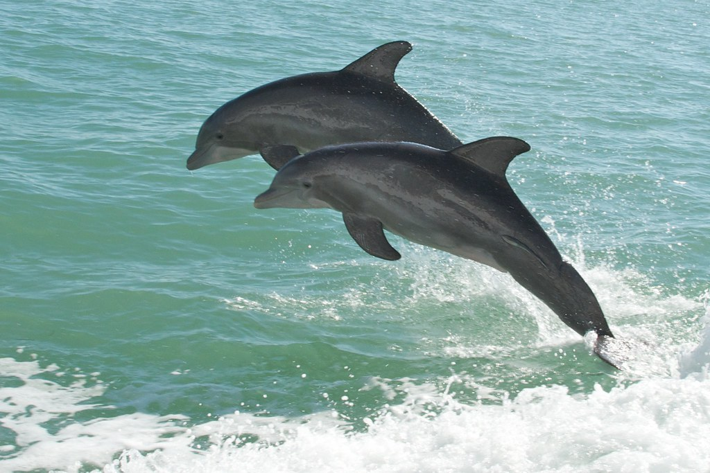 dolphin watch, treasure island, florida
