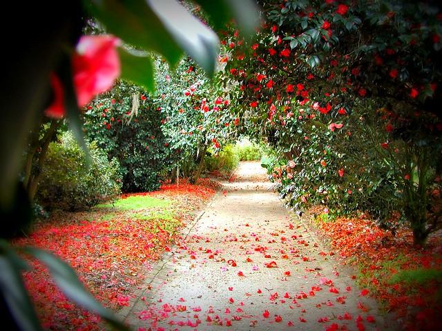 The Queen Of Hearts Garden Flickr Photo Sharing