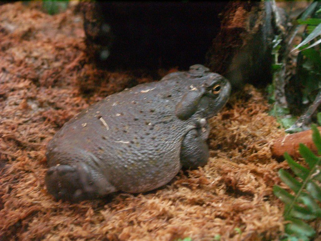 Image Result For Frog Aquarium