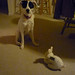 Riley and bunny 001