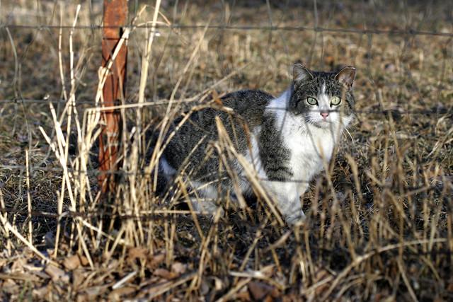 Cat Eyes Popped Out Aomonia