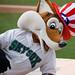 Sox the Fox