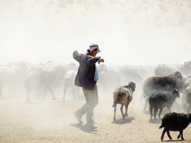 shepherd in Kyzylkum desertKyzylkum Desert