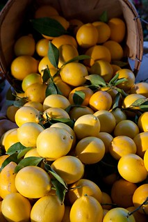 Meyer Lemons | by clayirving