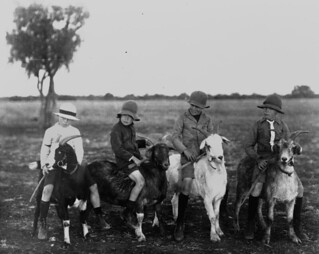Four boys riding goats, ca. 1918 | by State Library of Queensland, Australia