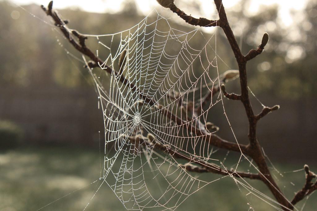pdf the girl spider web