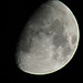 Sharing the Moon with David Levy