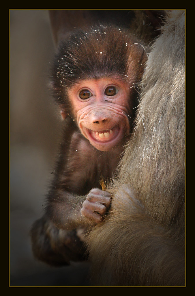 Baby Baboon Had Forgotten How Peaceful Life Is When You