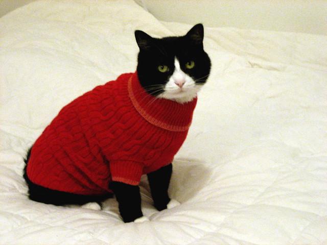 Krammer's Christmas Sweater