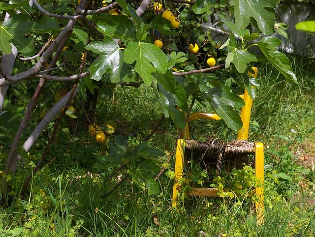 chaise jaune chaise jaune au milieu de citronniers et de. Black Bedroom Furniture Sets. Home Design Ideas