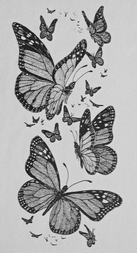 Monarch Butterfly On Flower Drawing