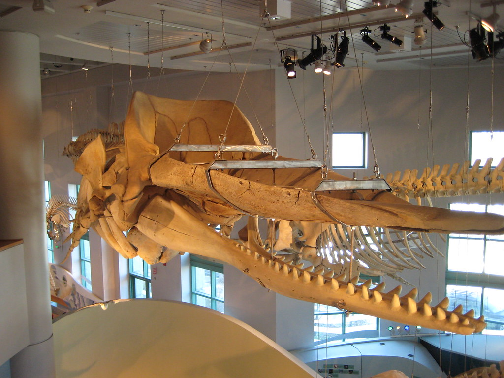 Museum Of Natural Sciences Raleigh Nc Jobs