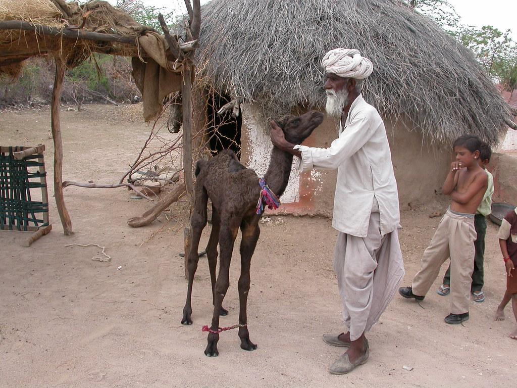 Old man with a young camel   Gilbert Laszlo Kallenborn