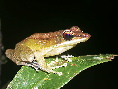 frog | by East Asia & Pacific on the rise - Blog