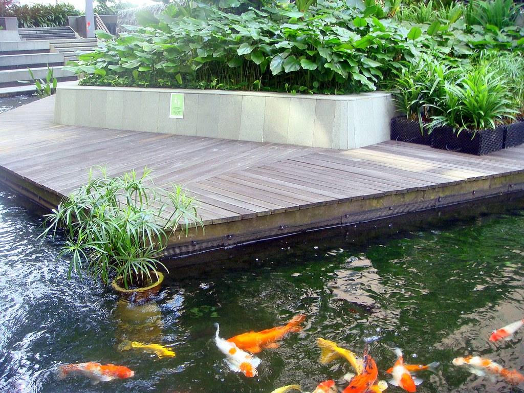 The biopolis fish pond for Design criteria of pond
