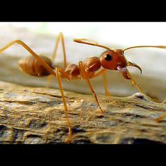 ant | by tropicaLiving - Jessy Eykendorp